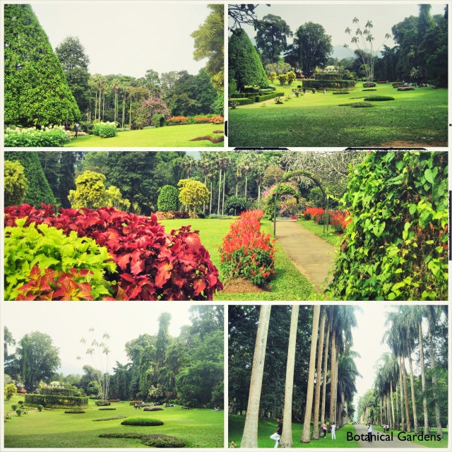 Botanical Gardens_Fotor