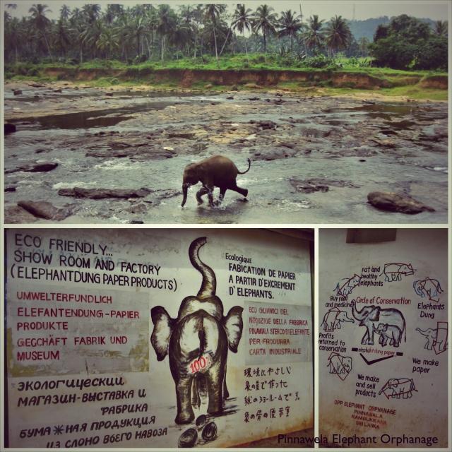 Elephant 1_Fotor
