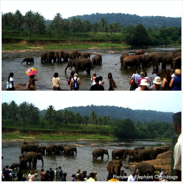 Elephant_Fotor