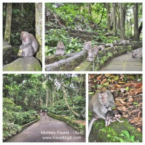 Moneky Forest